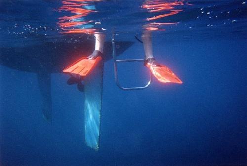 Flipper power by jeff50