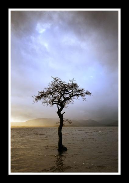 Milarrochy Tree by phillips