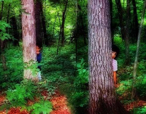 Elves in the woods by wirig