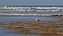 Bird in the waves by jclewis