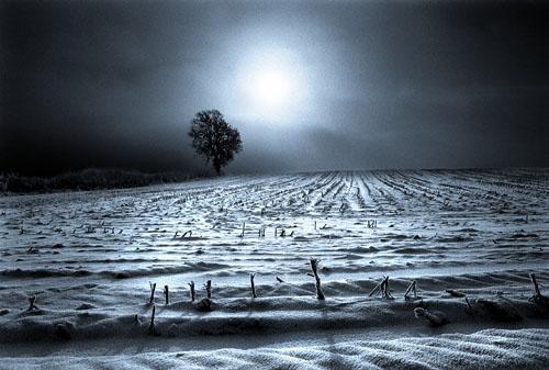 Moonlight Field by Topcat