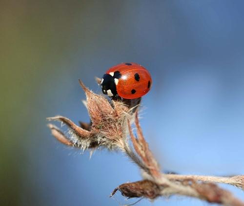 Ladybird. by pcjackso