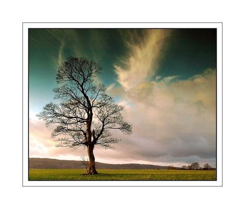 Ardmore tree 2 by kim64