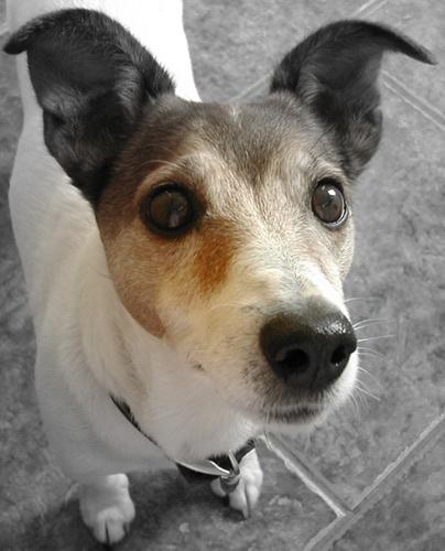 MY DOG BRAY by Georgiah