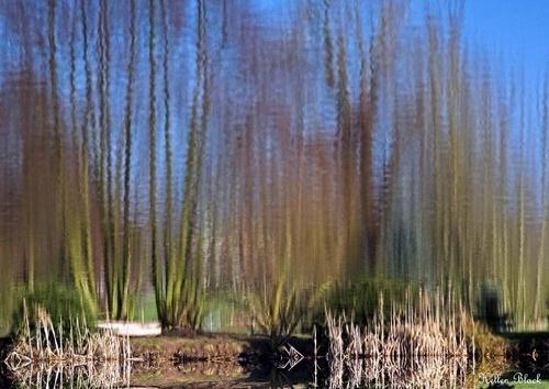 HARRIERS LAKE by RoyDavies
