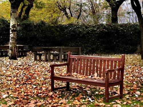 Autumn Park by Finlayoman