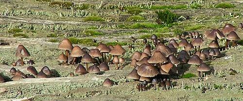 Fungi by neilhw