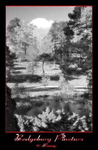Bedgebury Pinetum by Sezz