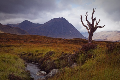 Rannoch Tree by wawatson