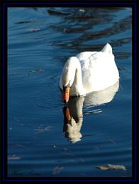 Kew Swan