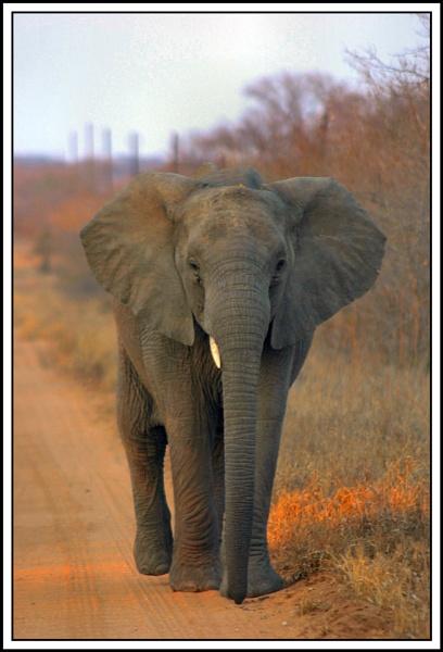 Elephants at Dawn by Brian_B