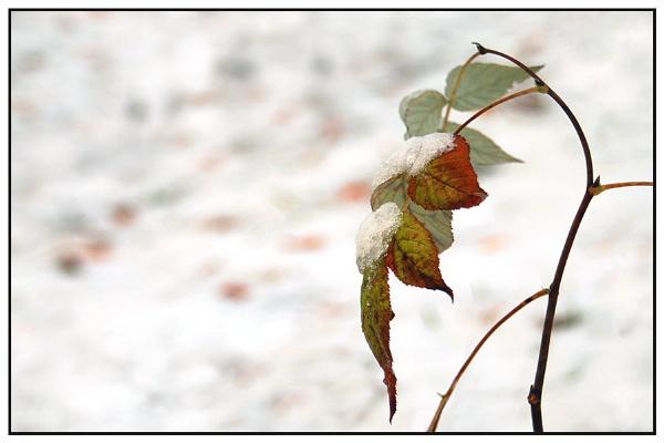 almost winter by zebhylon