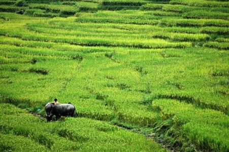 Sapa, Vietnam by Benji