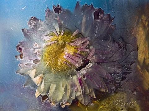 cvetak za artemiu by korni