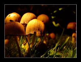 Night Mushrooms