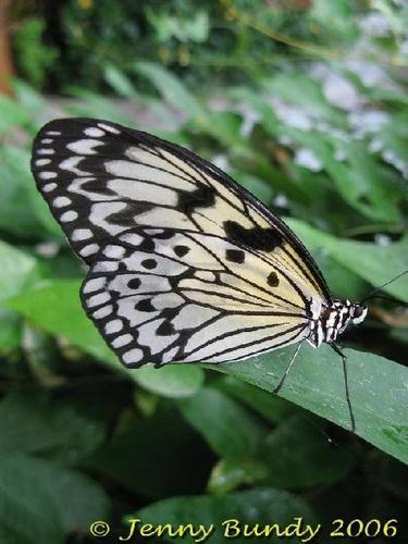 butterfly by jb_127