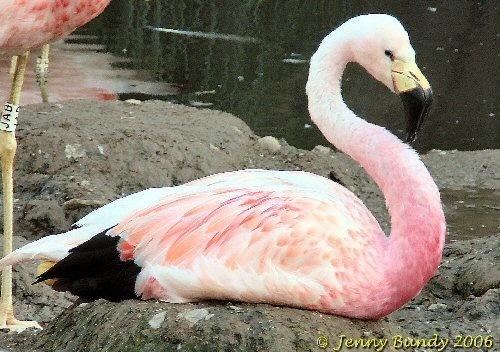 Flamingo by jb_127