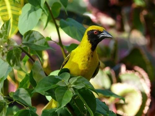 Bird by Courierfan
