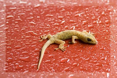 dead gecko by greensurfingbear
