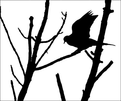 Pigeon by carmenfuchs