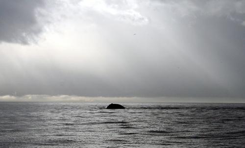 Humpback by laidleja