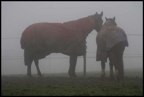 foggy day. by Sarahmann