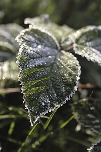 leaf by nads69