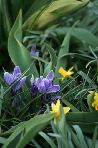 Purple Flowers. by SimPick