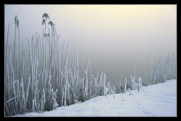 frozen mist by macdaniel