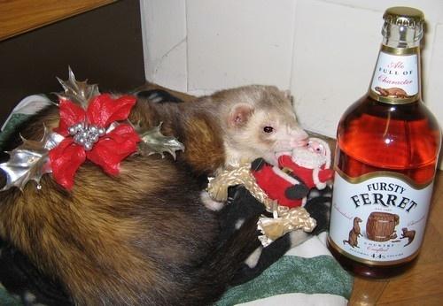 Fursty Ferret by Glostopcat