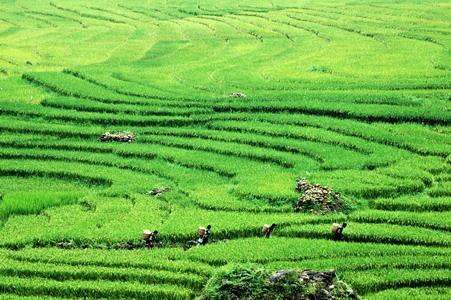 Rice Fields in Sapa, Vietnam by Benji