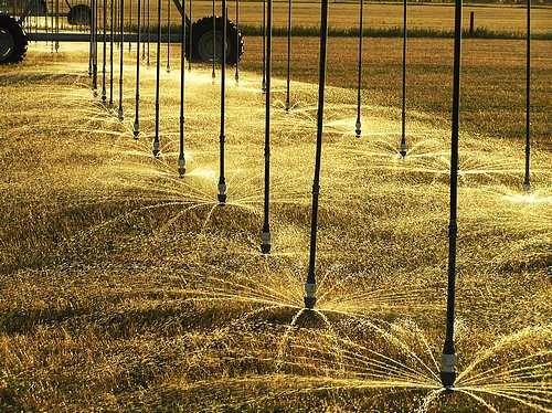 More Sprinklers. by Rogerex