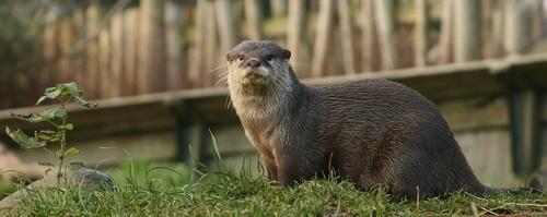 Otter Spotting by FeePhoto