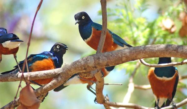 Birds by BrianSS