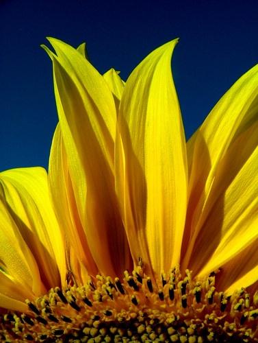 Summer Sun by BOB_CHATFIELD