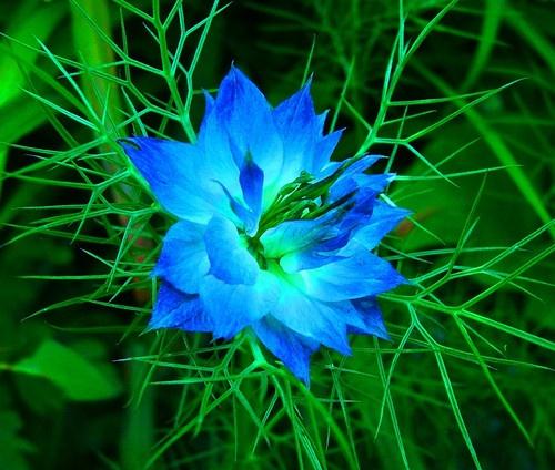BLUE FIRE by BOB_CHATFIELD