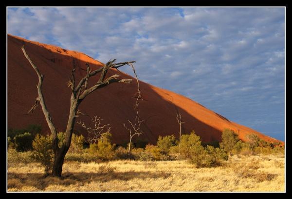 Ants on Uluru by iansamuel