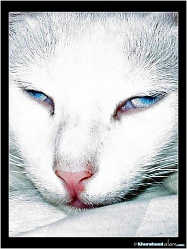 kitty by dotpix