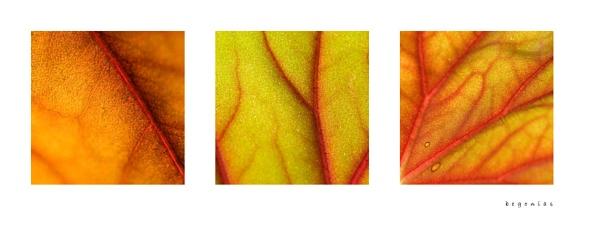 Begonia by ewanrayment