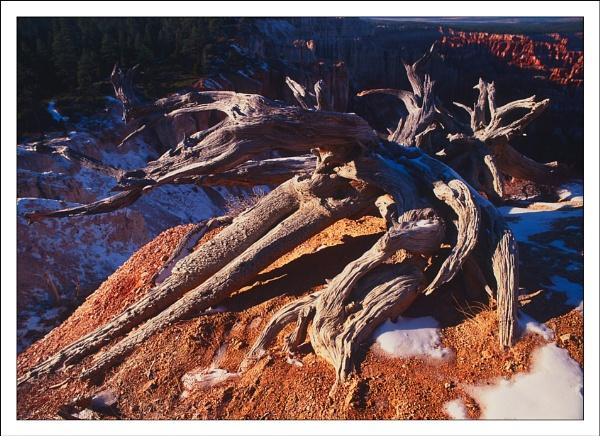 Bryce Canyon 1 by joolsb