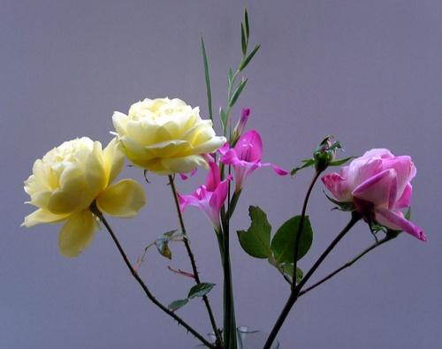 garden flowers by evelen