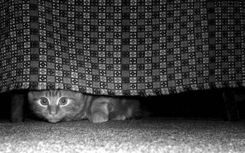 hiding ;) by narni