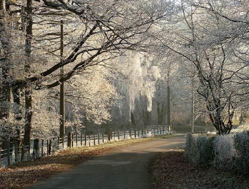 Frosty morning walk by jeff50