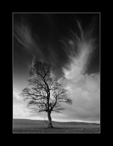 Ardmore Tree Mono by kim64