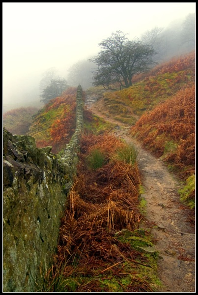 Follow the Path by wamp