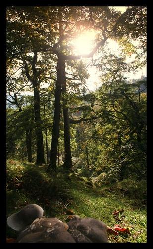 Campsie Valley by becca_cusworth
