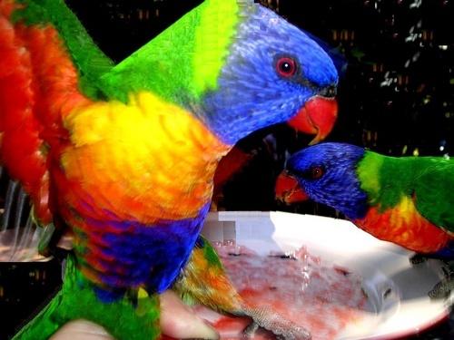 Rainbow Bird by Savvouri
