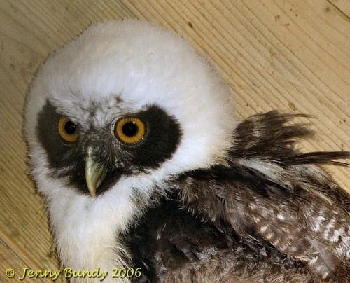 owl by jb_127