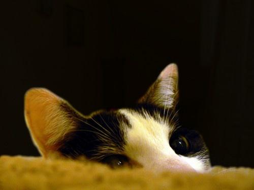 Peeking by catlover27