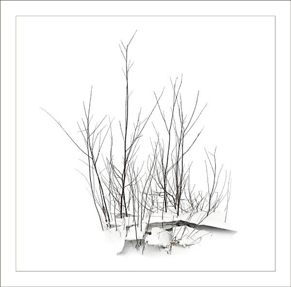 Snow And Broken Ice by conrad